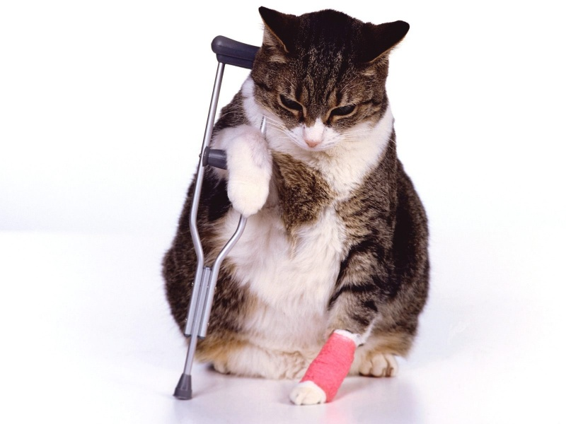 Why It Makes Sense To Have Cat Insurance